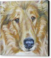 Collie Close Up Canvas Print