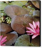 Colombian Pink Lillies Canvas Print