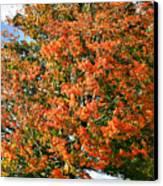 Color 2009 Canvas Print