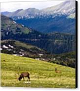Colorado Elk Canvas Print by Marilyn Hunt
