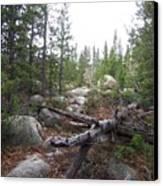 Colorado Trees Canvas Print