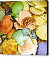 Colored Shells Canvas Print