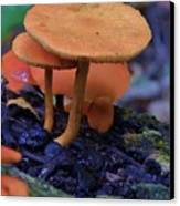 Colorful Mushrooms Canvas Print