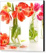Colorful Spring Tulips In Old Milk Bottles Canvas Print