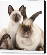 Colorpoint Rabbit And Siamese Kitten Canvas Print by Mark Taylor
