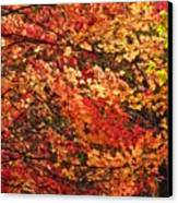 Colors Blowing In The Wind Canvas Print by Lori Frisch