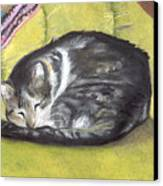 Comfortable Cat Canvas Print