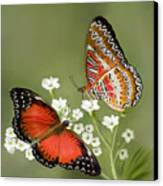 Common Lacewing Butterfly Canvas Print by Thanh Thuy Nguyen