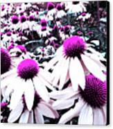 Cone Flower Delight Canvas Print by Kevyn Bashore