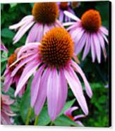 Three Coneflowers  Canvas Print