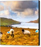 Connemara Sheep Grazing Over Killary Fjord Canvas Print by Mark E Tisdale