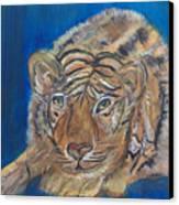 Contented Tiger Canvas Print