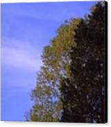 Contrasting Trees Against Sky Canvas Print by Randy Muir