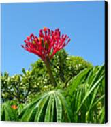 Coral Bush With Flower And Fruit Canvas Print
