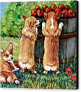 Corgi Apple Harvest Pembroke Welsh Corgi Puppies Canvas Print by Lyn Cook