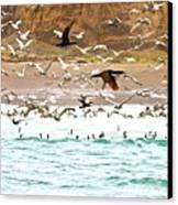 Cormorant Flight In Frenzy Canvas Print