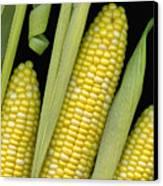 Corn On The Cob I  Canvas Print