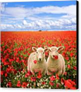 Corn Poppies And Twin Lambs Canvas Print by Meirion Matthias