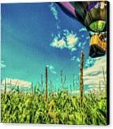 Cornfield View Hot Air Balloons Canvas Print by Bob Orsillo