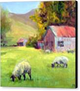 Coromandel New Zealand Sheep Canvas Print
