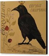 Corvus Caurinus Canvas Print