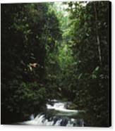 Costa Rica Waterfall In The Carocavado Canvas Print by James Forte