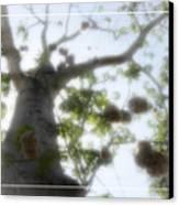Cotton Ball Tree Canvas Print