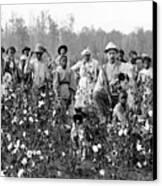 Cotton Planter & Pickers, C1908 Canvas Print