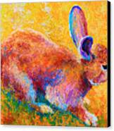 Cottontail II Canvas Print by Marion Rose