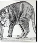 Cougar Canvas Print by Daniel Shuford