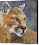 Cougar Canvas Print by Debra Mickelson