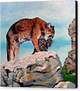 Cougars Canvas Print