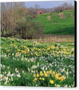 Country Spring Canvas Print by Bill Wakeley