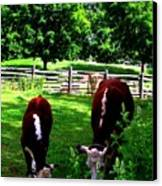 Cows Grazing Canvas Print