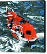 Coy Koi Canvas Print by Charles Parks