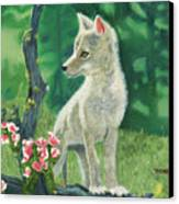 Coyote Pup Canvas Print by Terry Lewey