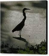 Crane Reflections Canvas Print
