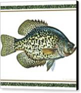 Crappie Print Canvas Print by JQ Licensing