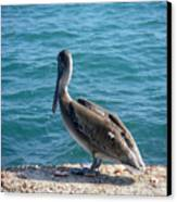 Creatures Of The Gulf - Lulled By The Waves Canvas Print