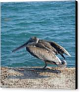 Creatures Of The Gulf - Scratch N' Sniff Canvas Print