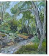 Creek At Linn Haven Canvas Print
