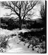 Creekside Winter Canvas Print