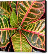 Croton - A Center View Canvas Print