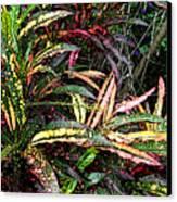 Croton 1 Canvas Print by Eikoni Images
