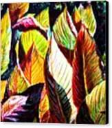 Crotons Sunlit 2 Canvas Print