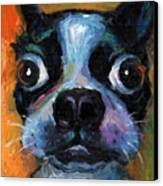 Cute Boston Terrier Puppy Art Canvas Print by Svetlana Novikova
