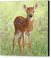 Cute Whitetail Deer Fawn Canvas Print by Crista Forest