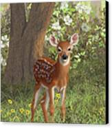 Cute Whitetail Fawn Canvas Print by Crista Forest