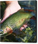 Cutthroat Trout On The Middle Fork Canvas Print