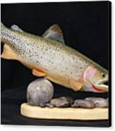Cutthroat Trout On The Rocks Canvas Print by Eric Knowlton